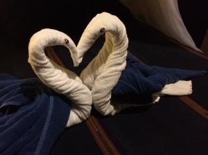 swans closeup